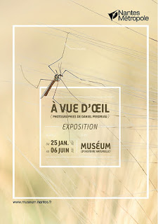 «A VUE D'OEIL» par Daniel Perdriau
